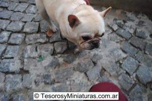 Bulldog Francés Macho 02