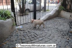 Bulldog Francés Macho 03