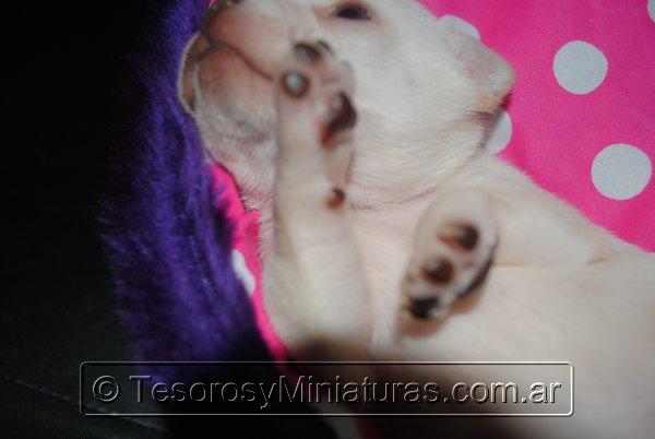 Chihuahua_Blanca_02