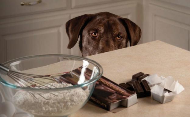 Los Perros y el Chocolate